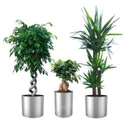 Живые деревья в горшках